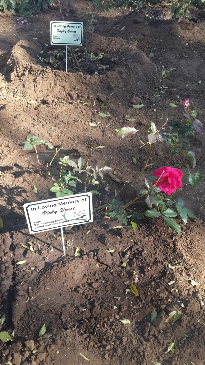 The Boys Memorial Mother's Day Rose